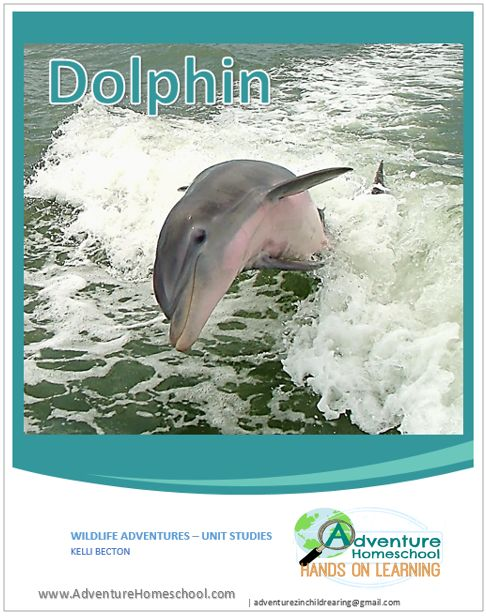 a study of dolphin talk Digitized recordings of a male bottlenose dolphin suggest these marine mammals don't actually whistle, but instead talk like humans, using.