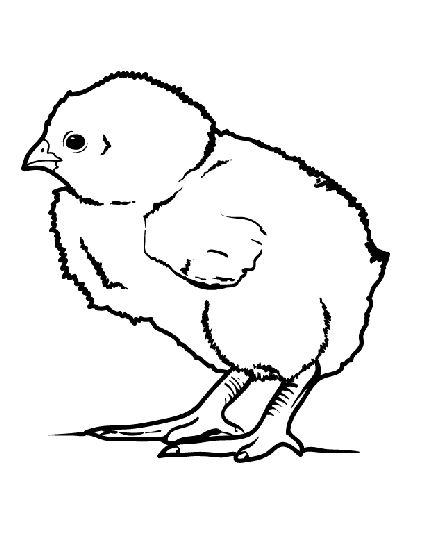 Лучшие изображения (189) на доске «coloring pages» на pinterest - Baby Chick Coloring Pages Print