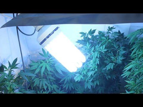 Consejos para producción indoor de marihuana. Cómo configurar la sala de cultivo. AL NATURAL 43