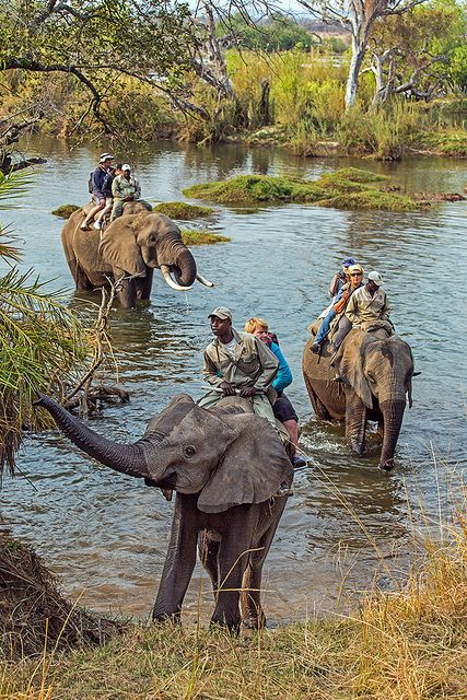 Elephant Safari, Zambezi River near Victoria Falls, Zambia ... This too!