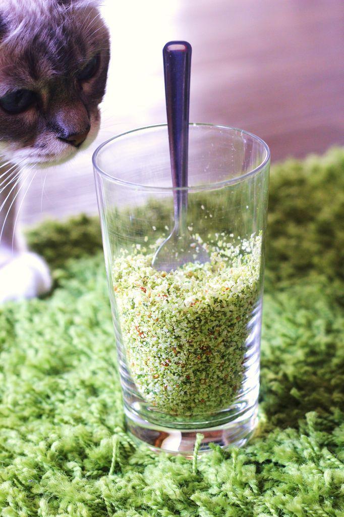 Désydrateur : Créer son sel végétal façon herbamare