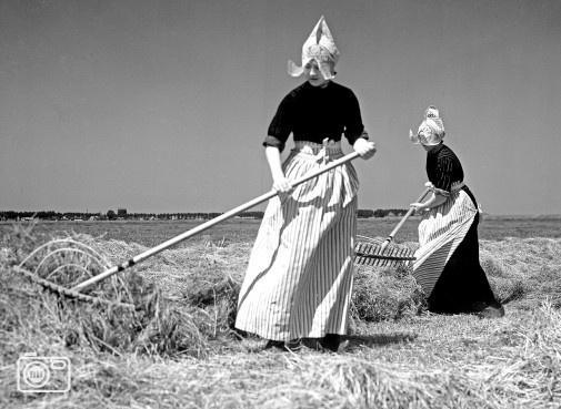 1941 Volendamse meisjes keren gemaaid gras