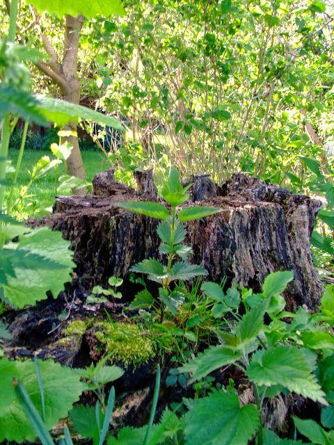 EN LANDLIGGERS DAGBOG: Naturens gødning