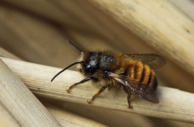 comment attirer les abeilles au jardin 1 2 apiculture. Black Bedroom Furniture Sets. Home Design Ideas