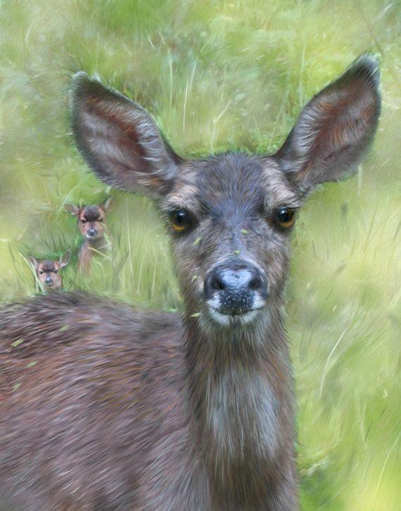 198 best images about DEER SKETCHES on Pinterest A deer