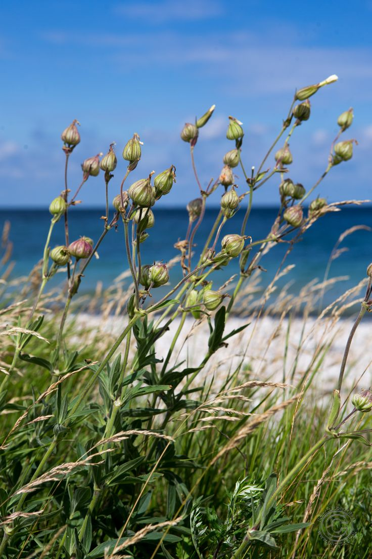 Naturen ved Korshage i Rørvig i Odsherred