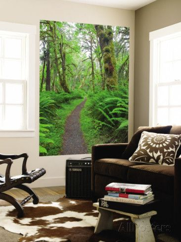 Maple Glade Trail, Quinault Rain Forest, Olympic National Park, Washington, USA Wall Mural by Jamie & Judy Wild - at AllPosters.com.au