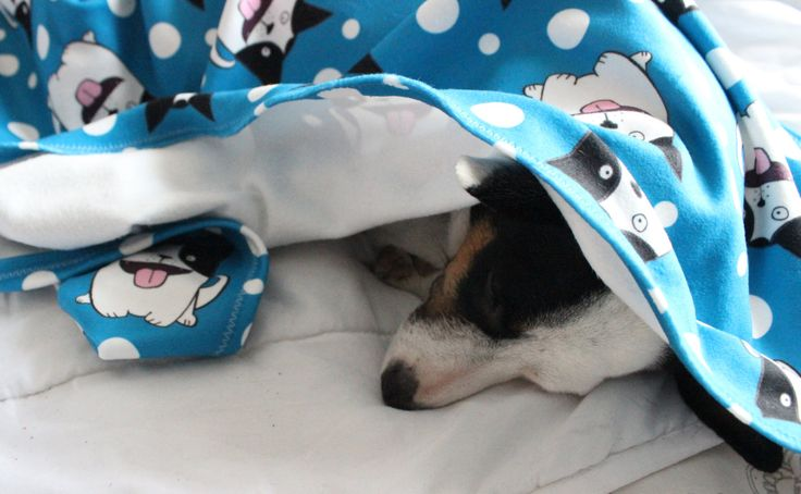 Coperta in morbido pile per cani con design originale Illumino di un cagnolino a fumetto. Sfondo turchese e a pois bianchi. di IlluminoHomeIdeas su Etsy