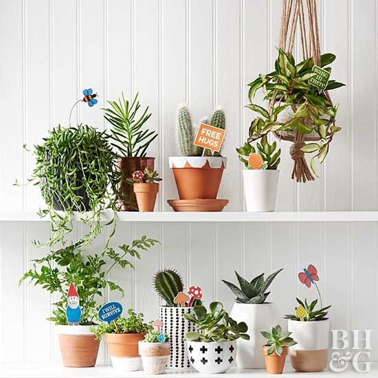 Many houseplants can be tricky to keep up, especially if you are busy.