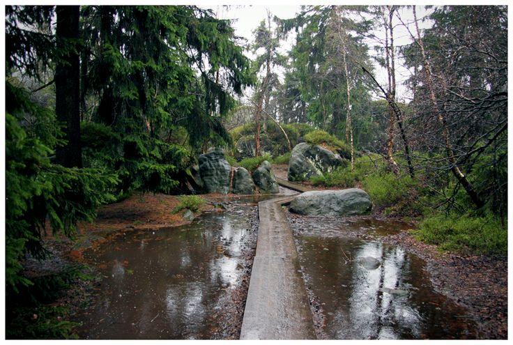 Cały dzień w deszczu w Szczelińcu Wielkim. Pogoda idealna do zdjęć!