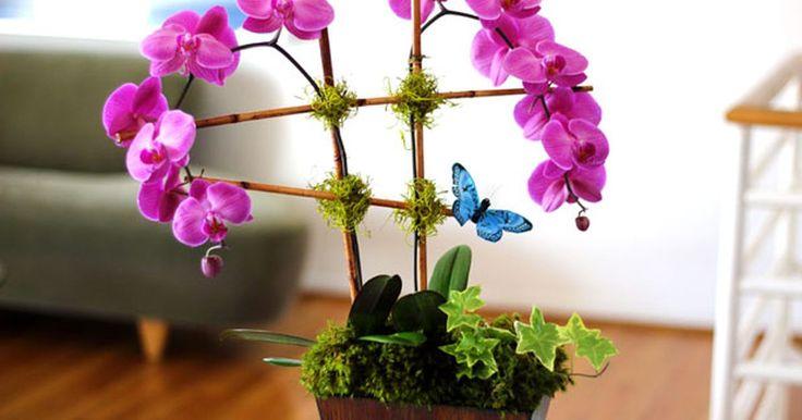 Como transformar uma orquídea em um arranjo espetacular. As orquídeas já foram uma planta rara e cara, mas atualmente estão disponíveis para compra em qualquer lugar — supermercados, lojas de materiais para o lar, estufas — a preços às vezes tão baixos quanto os de flores comuns. Embora as orquídeas sejam ótimos presentes e decoração para a casa, as lojas geralmente as embalam em potes plásticos simples ...