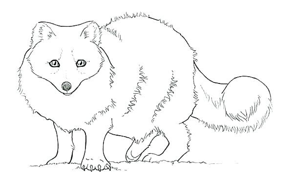 Cute Fox Coloring Pages Ideas For Kids Fox Coloring Page Animal