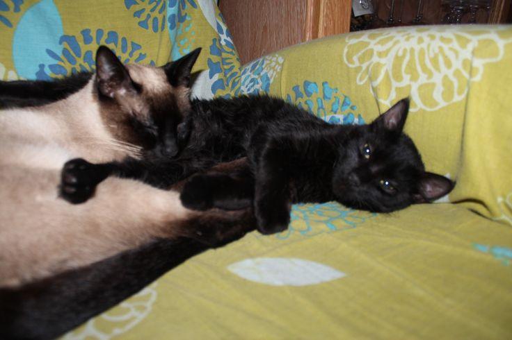 Orión y Kira