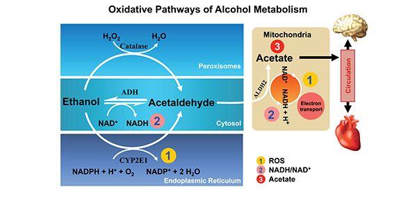 chronic disease metabolic syndrome health effects pdf