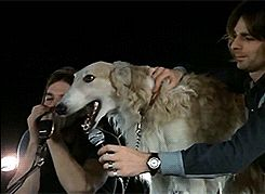 dog/pink floyd david gilmour Roger Waters Richard Wright 1972 Rick Wright