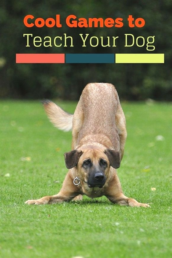 Dog Training With Some Sound Easy Tips Dog Training Puppy