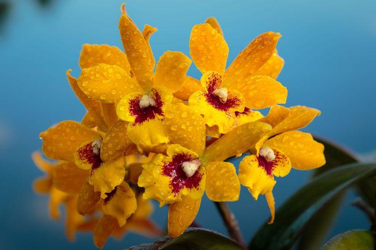 Orchid by Scott Spakowski aka Svelte 286