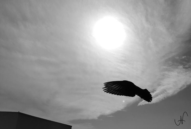 Alien Dove