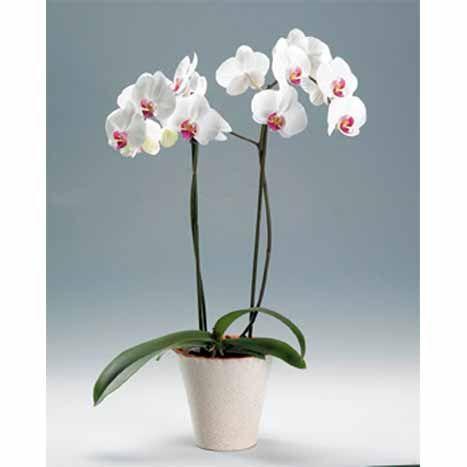 Орхидеи в горшочках. Любые.))