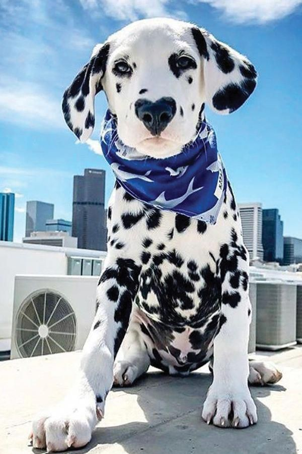 Excellent Beautiful Dogs Information Are Readily Available On Our