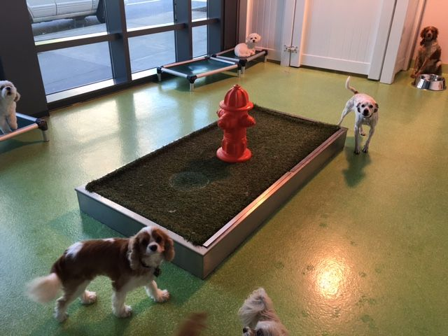 "Our functional indoor puppy potty is perfect for solving your urine-soaked floor problem. Find out why doggy daycare centers and boarding facilities use our nifty inside dog potty. No training required – dogs naturally search for grassy areas to relieve themselves and they will sniff out the most widely used ""indoor grass"" where other dogs …"