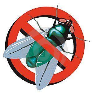 Em determinadas épocas do ano, com aumento das temperaturas e da umidade o número de mosquitos aumenta. Até uma simples poça d'água junta mosquitos na pia, no chão e nos balcões da cozinha. No verão a casa de praia mais parece …
