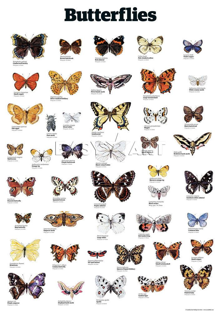 Butterflies - The Guardian Collection/Wallcharts
