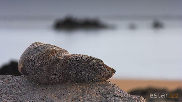Seal | Flickr - Photo Sharing!
