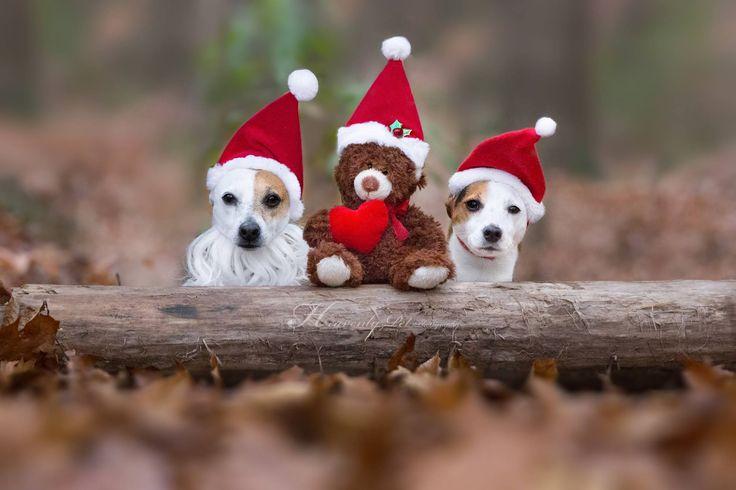 Christmas JRTs