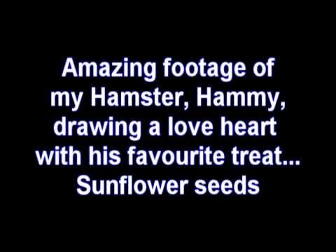 Hamster draws love heart with sunflower seeds  -- a little fun here about sunflower seeds