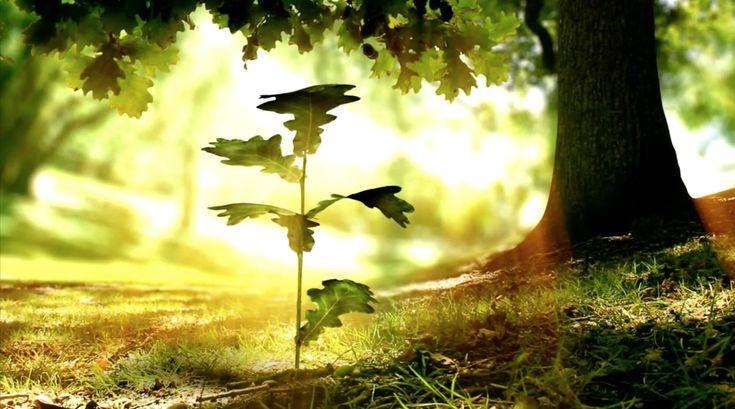 Interactieve Determinatietabel | Over bladeren, bomen en herbarium