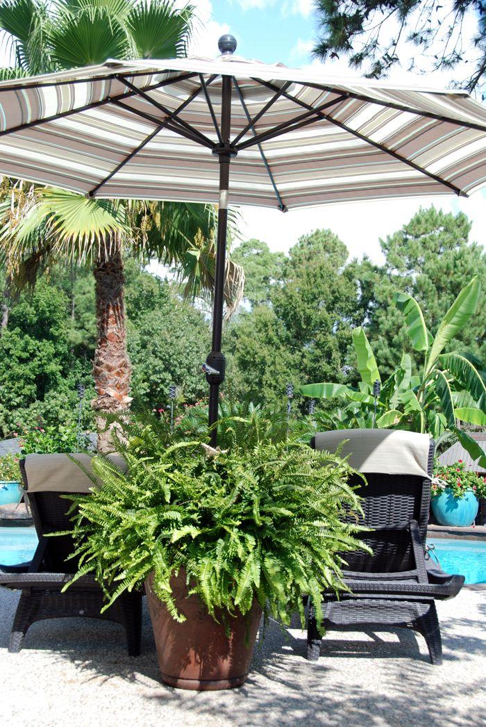 My first umbrella planter
