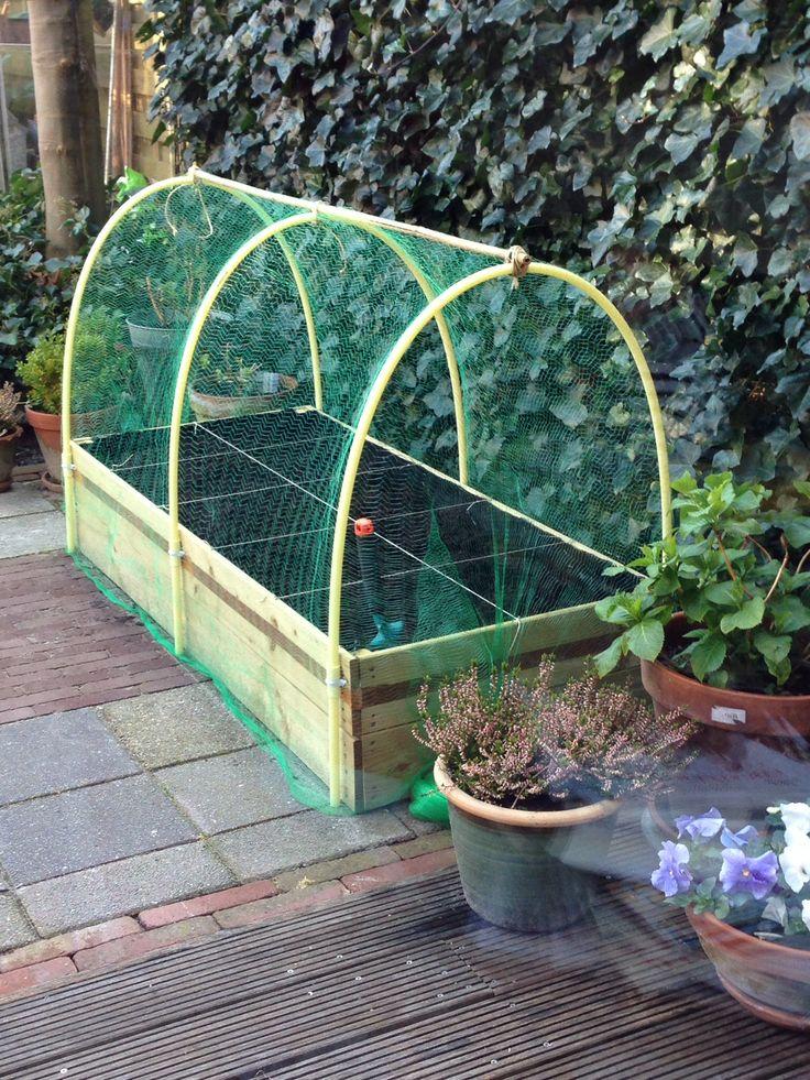 16 besten Kruiden-  groentetuin Bilder auf Pinterest Gardening - gartenplanung beispiele kostenlos
