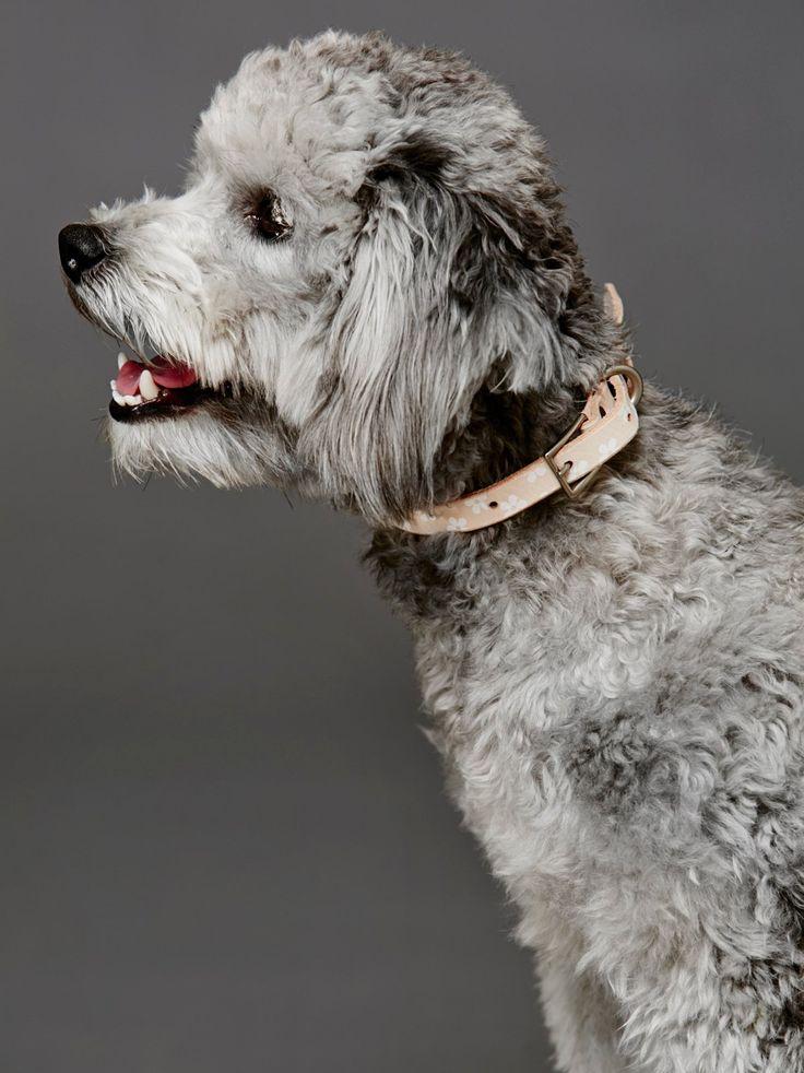Daisy Paint Leather Collar