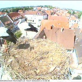 Una webcam a fotogrammi su un nido di cicogne nella cittadina di Höchstadt an der Aisch, vicino a Bamberg, in Baviera (Germania).  La particolarità di quest