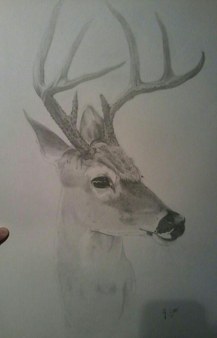 #deer #drawing #realistic #american #hirsch #weißwedelhirsch #amerikanisch #zeichnung #realistisch