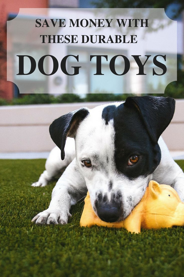 The Best Dog Toys For Dogs Who Chew Best Dog Toys Puppy Proofing Dog Toys