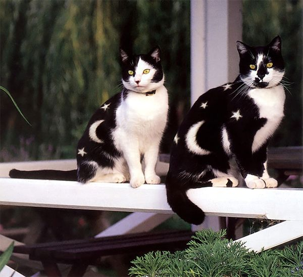 Reminds us of the kitties from Sailor Moon.
