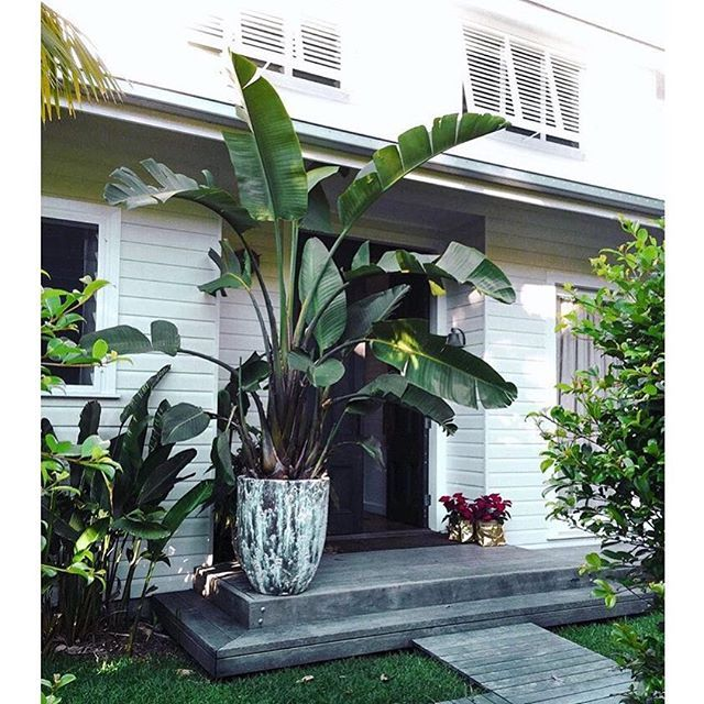 RG: @lonijane Beautiful #MagnoliaHouse in #ByronBay @byron_beach_abodes