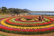 Indira Gandhi Memorial Tulip garden, previously Model Floriculture Center, is a tulip garden in Srinagar, India. It is the largest tulip garden in Asia spread over an area of about 12 hectares.