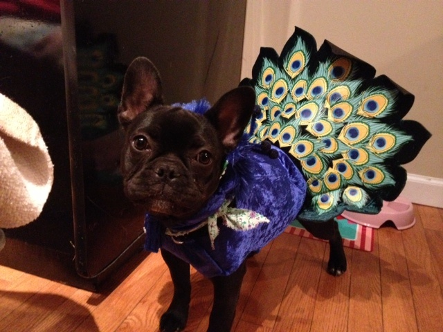 Here's Penny Lane again. In her peacock costume for the