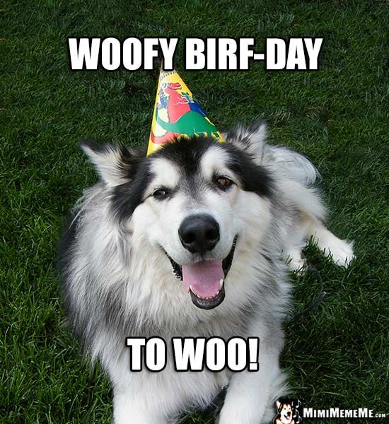 268 best funny animal birthday memes images on pinterest