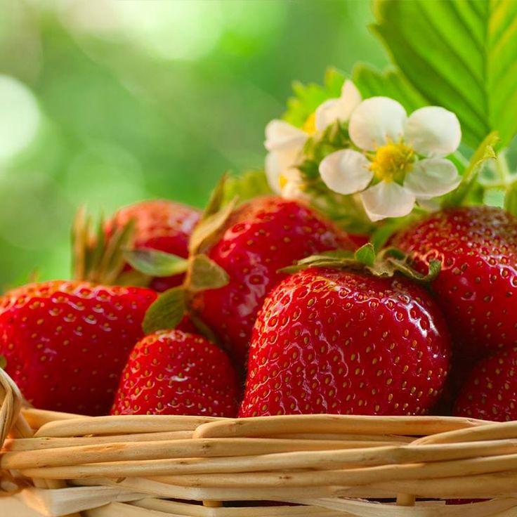 Bahar aylarının vazgeçilmez meyvesi olan çileğin, lezzetinin yanı sıra sağlığa birçok faydası var. 1 avuç dolusu çilek günlük C vitamini ihtiyacımızı karşılar. #kudretinternational #hastane #saglik #cilek #ankara #turkiye