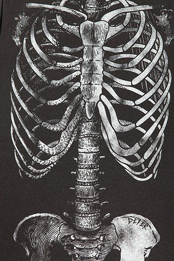 53 best images about bones→ribcage & others on pinterest | plugs, Skeleton