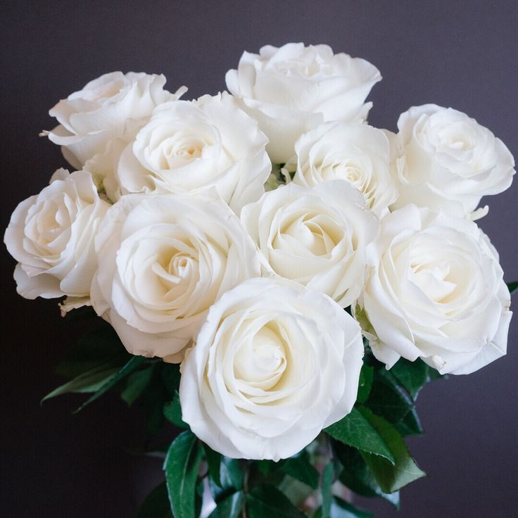 Let's take a closer look at Tibet, a white to creamy white standard rose variety.  Tibet roses have an elegant classic shape with blooms that open nicely to reveal it's true beauty.  With medium sized blooms and various lengths this rose variety is a versatile option.  ・・・  Length: 40-70 cm | Bud Size: 6 cm