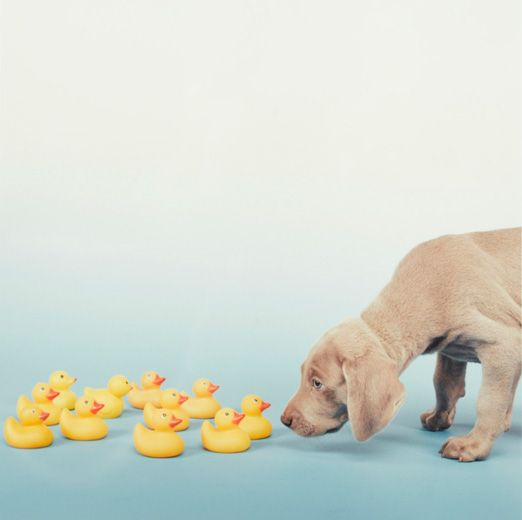 Adorable Weims by William Wegman