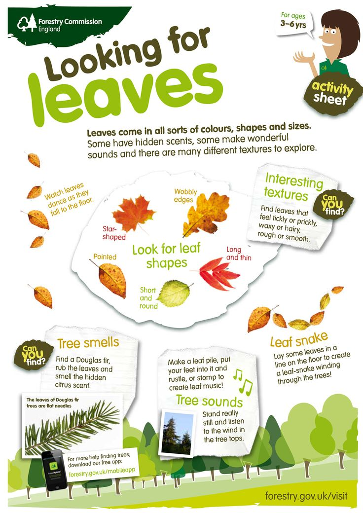 Have a go at our looking for leaves activity sheet! Download yours from http://www.forestry.gov.uk/forestry/INFD-9ALHFP.