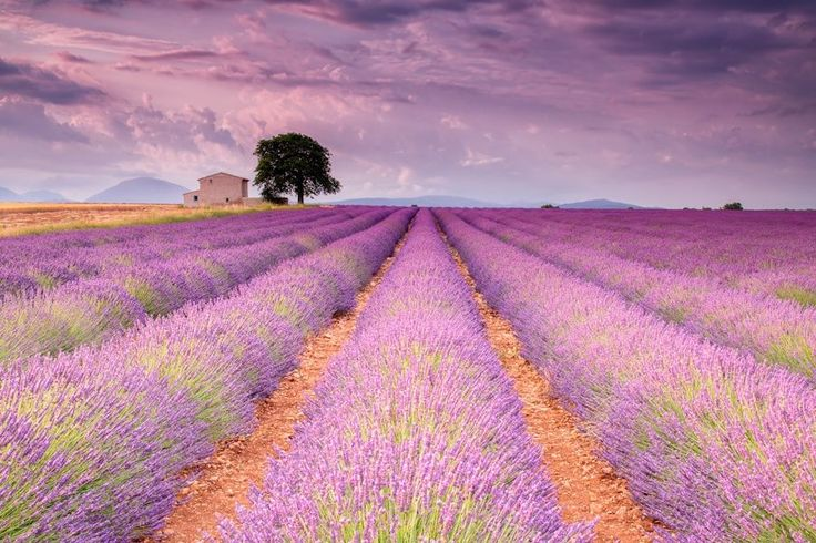 Stone House in Lavender Field by Michael Blanchette on 500px
