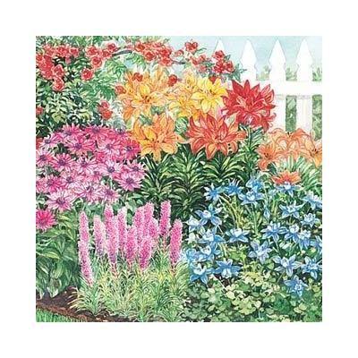 1000 Images About Hummingbird Garden On Pinterest Gardens Hummingbirds And Perennials