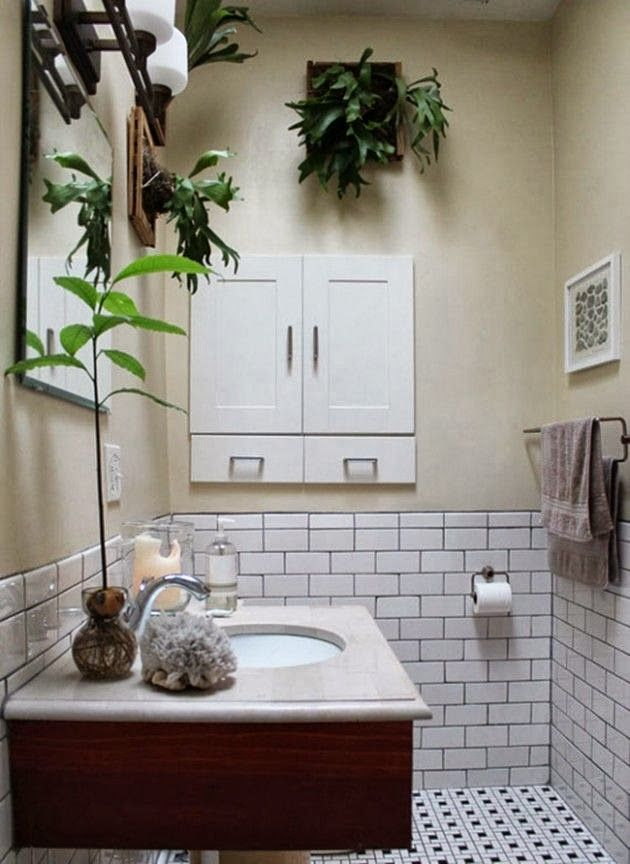 Bathroom Decorating Ideas With Plants best 25+ staghorn fern ideas only on pinterest | staghorn plant